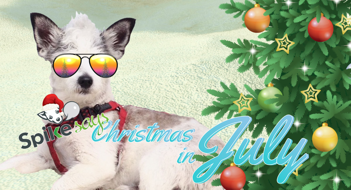 cool dog in sunglasses on a beach with Christmas decorations